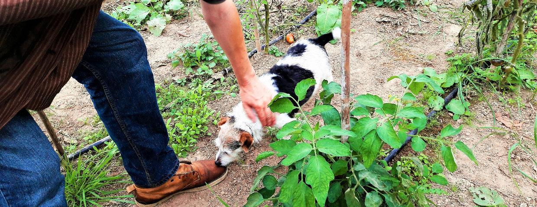 main Daniel et chien