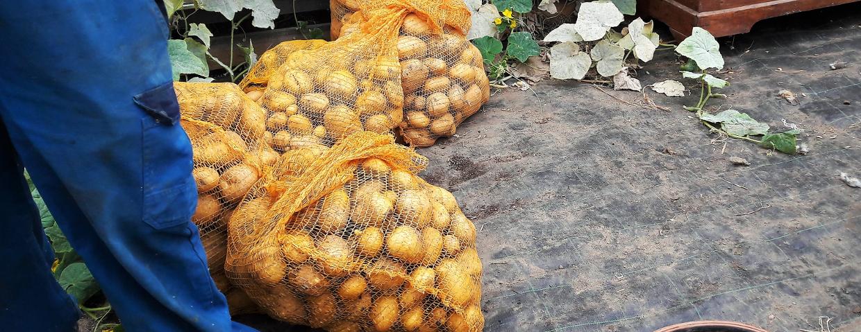 sac pommes de terre et Daniel